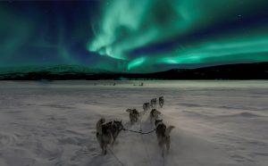 auszeitkanada aurora yukon hundeschlittentour